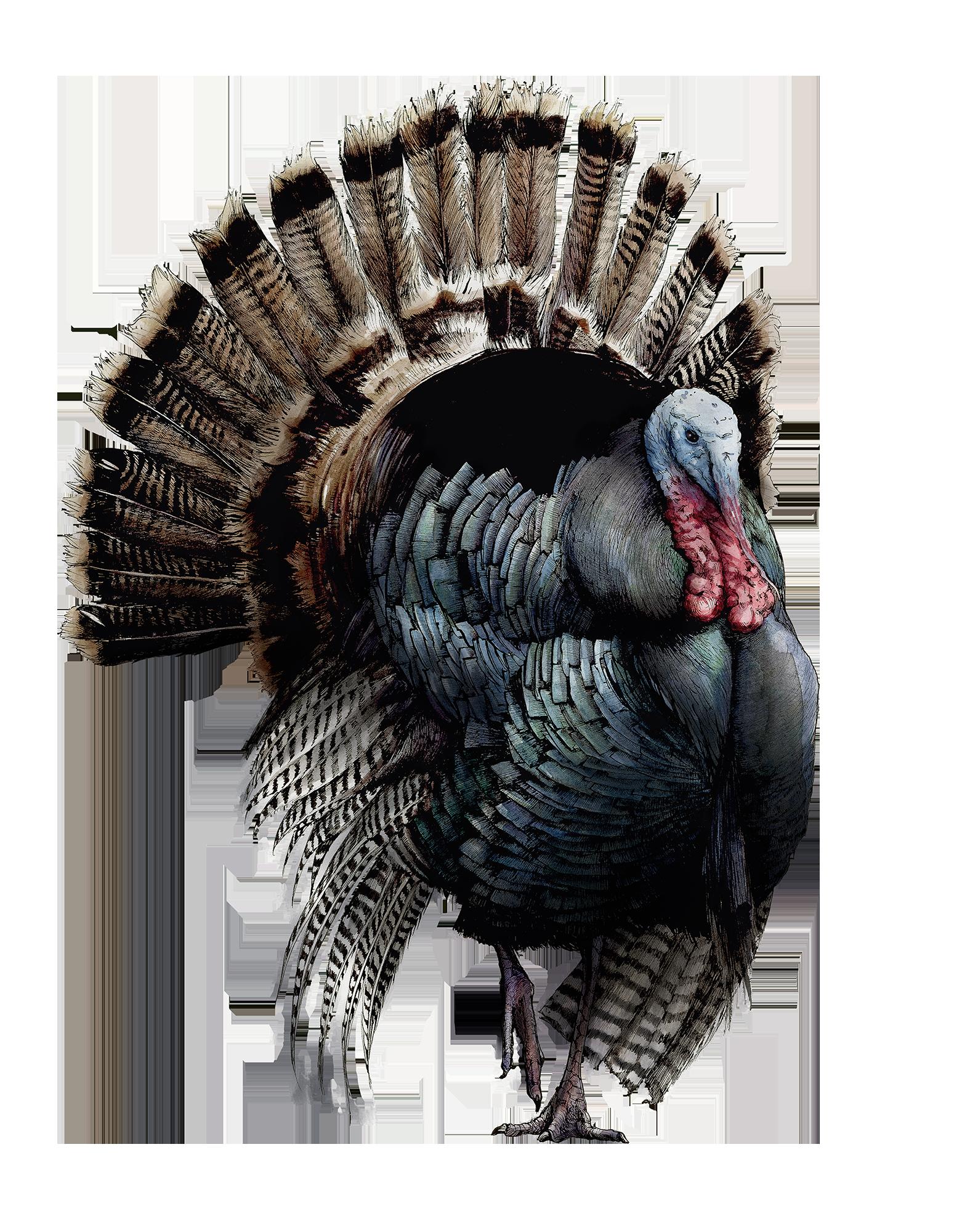 TurkeySmaller.png
