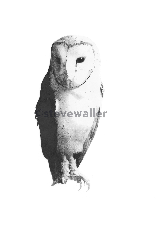 Owl#3OnlineVersionWatermarked.jpg