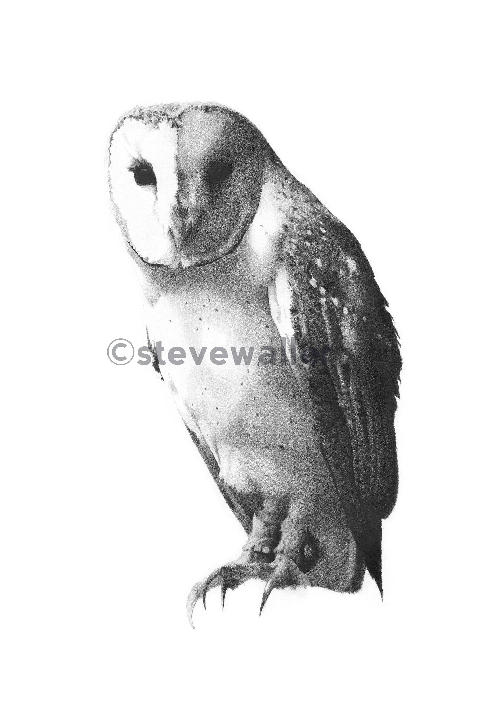 Owl#2OnlineVersionWatermarked.jpg