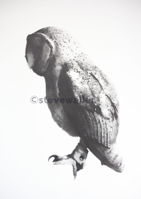 Owl#1OnlineVersionWatermarked.jpg