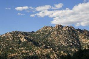 Mountain Pine Trees_20091020