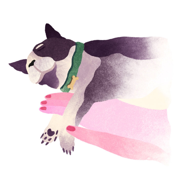 Jesse_Zhang_Illustration_Dog_Boston_Terrier_Animals_Web.jpg