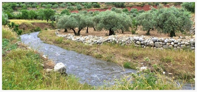 Stream near modern day Bethlehem, Palestine (courtesy Hike the Holy Land tours)