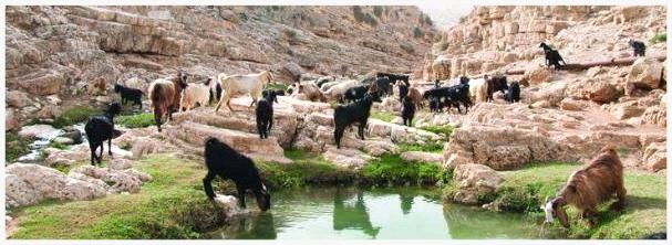 Modern day Nachal Prat stream, Judean desert (Yehoshua Halevi)