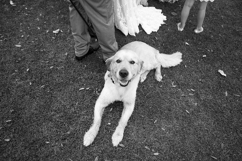 60 dog at perth wedding harold boas gardens 074.jpg