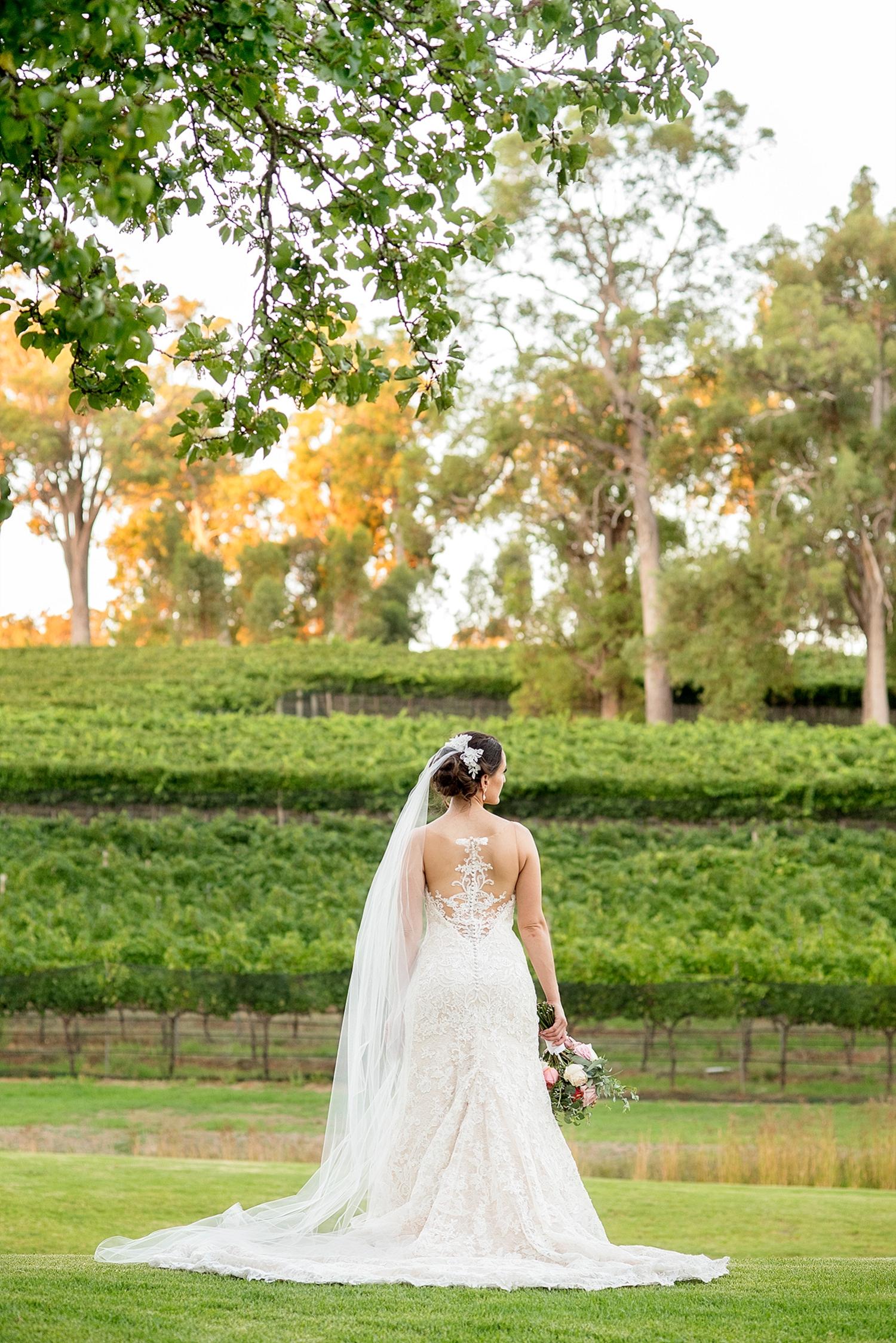64_millbrook winery wedding perth bride in vineyard .jpg