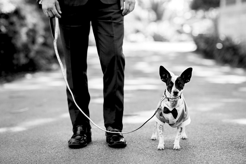 17_groom and dog as ring bearer wedding perth.jpg