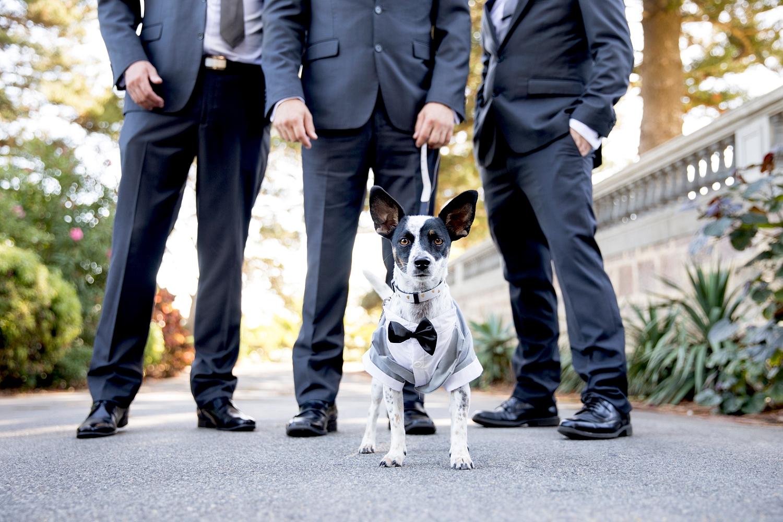 18_dog as ring bearer wedding perth.jpg