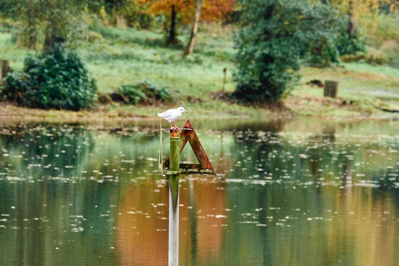 Bird on a pole