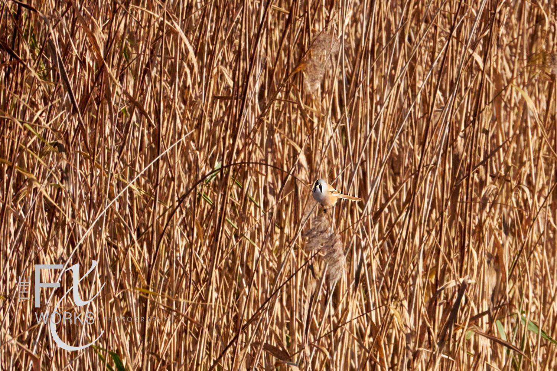 Wildlife Photographer - www.thefxworks.co.uk1.JPG