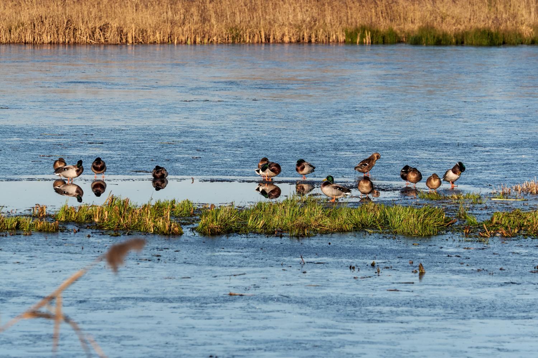 Wildlife Photographer - www.thefxworks.co.uk9.JPG