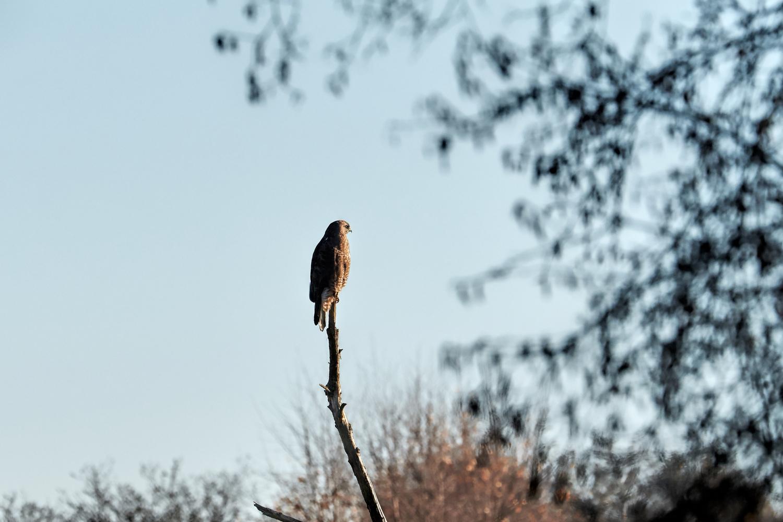 Wildlife Photographer - www.thefxworks.co.uk13.JPG