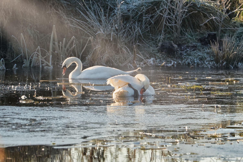 Wildlife Photographer - www.thefxworks.co.uk14.JPG