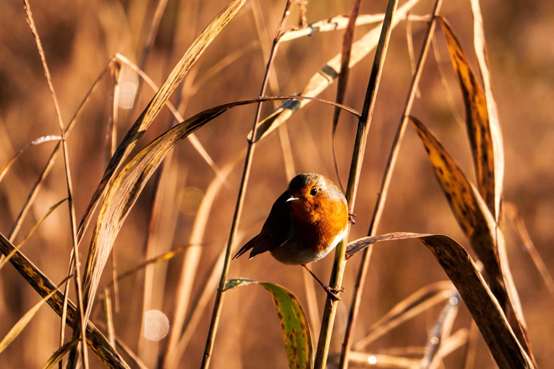 Wildlife Photographer - www.thefxworks.co.uk15.JPG