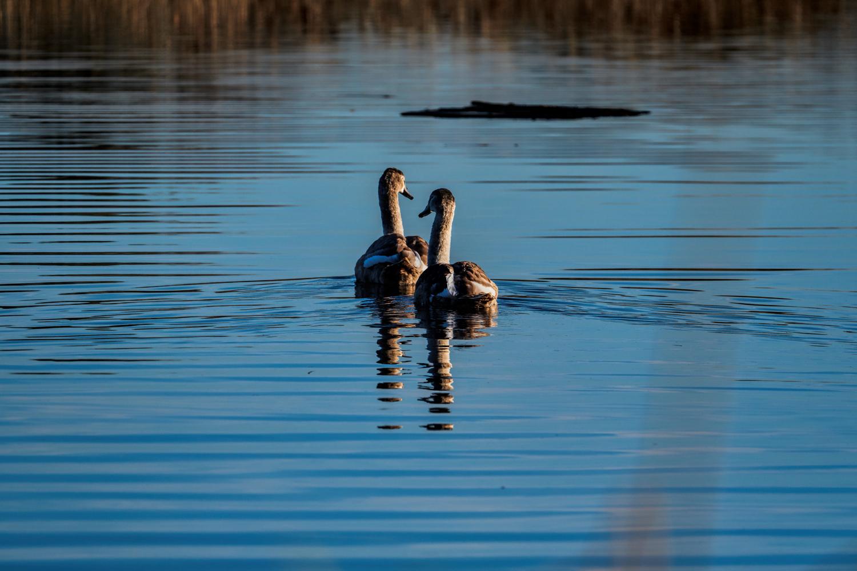 Wildlife Photographer - www.thefxworks.co.uk16.JPG