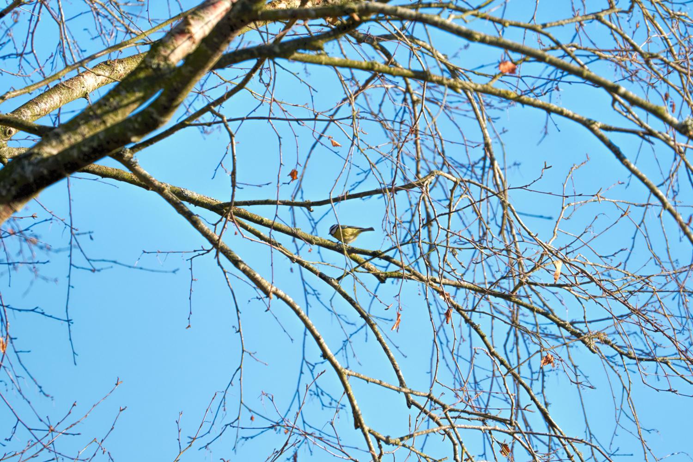 Wildlife Photographer - www.thefxworks.co.uk19.JPG