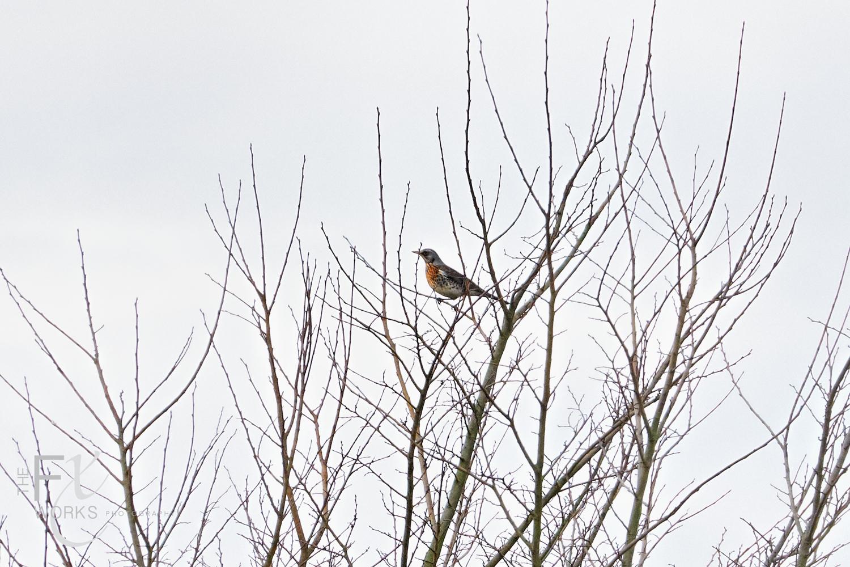 Wildlife Photographer - www.thefxworks.co.uk24.JPG