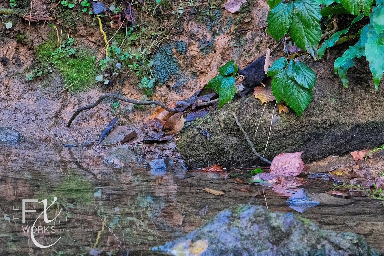 Wildlife Photographer - www.thefxworks.co.uk25.JPG