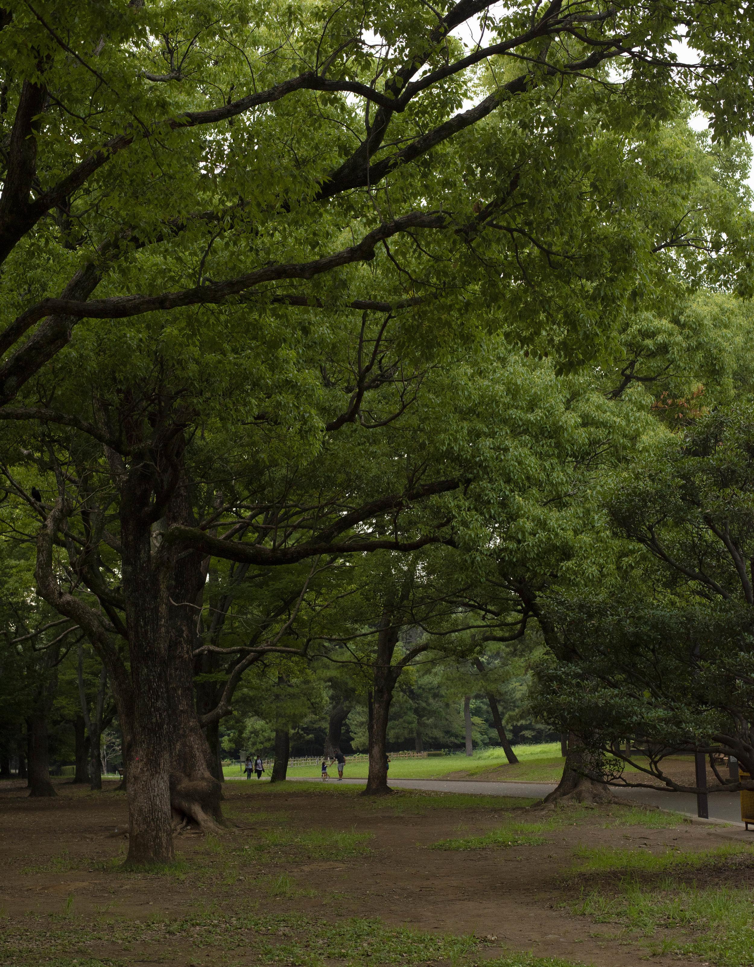Yoyogi Park, Tokyo