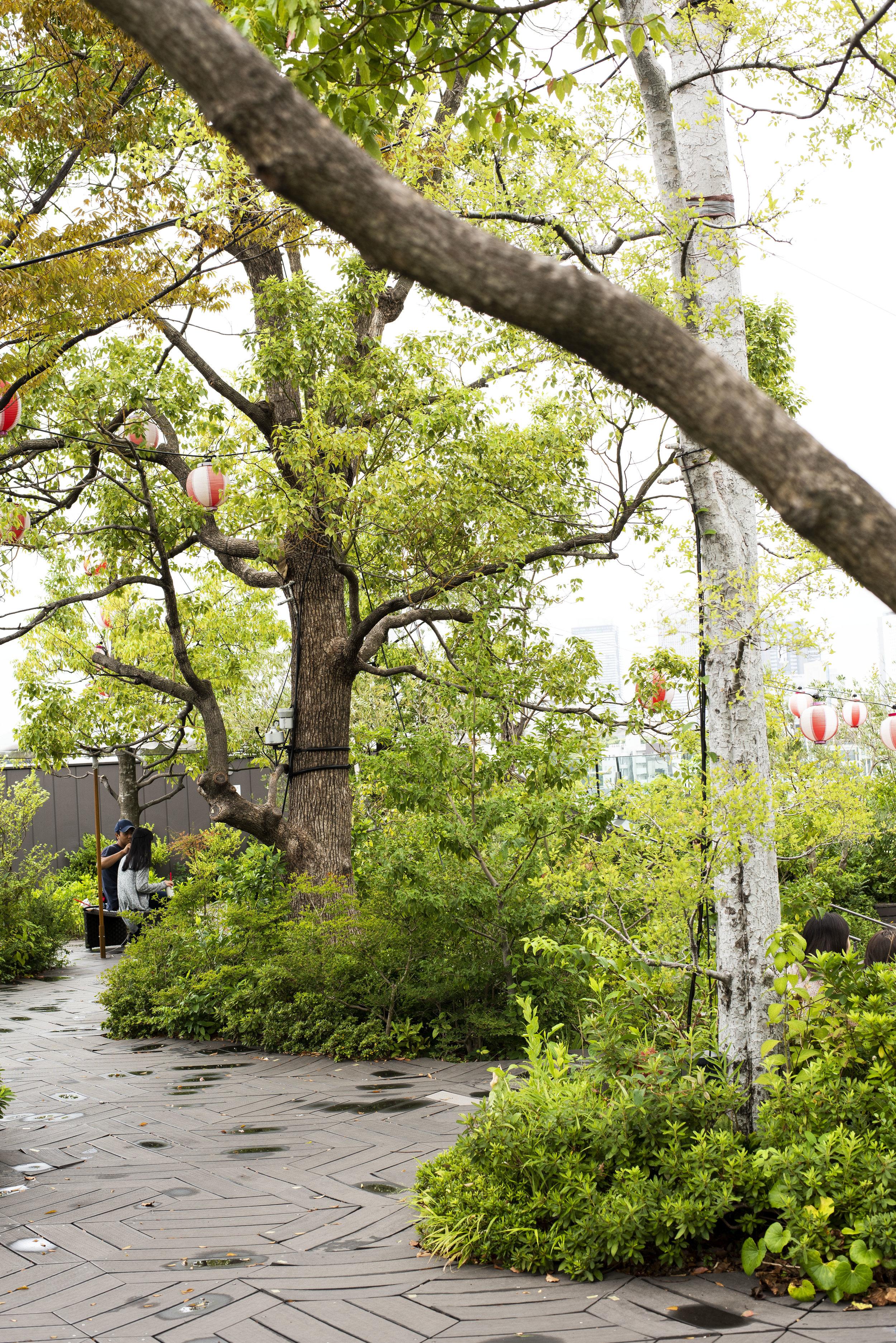 Roof Garden, Tokyo