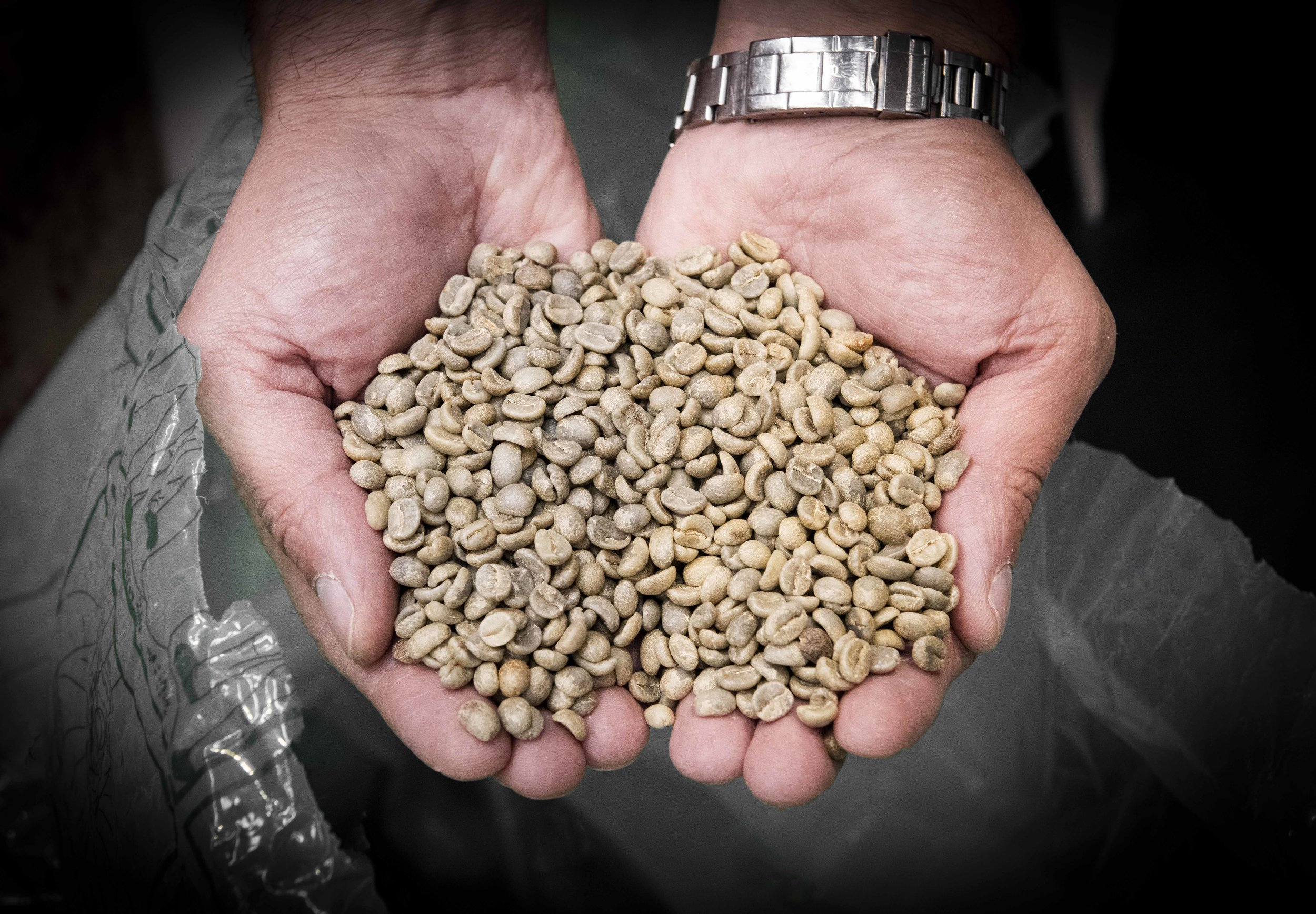 Coffee beans for 80plus specialty coffee. Photo © Barcelona Food Experience.