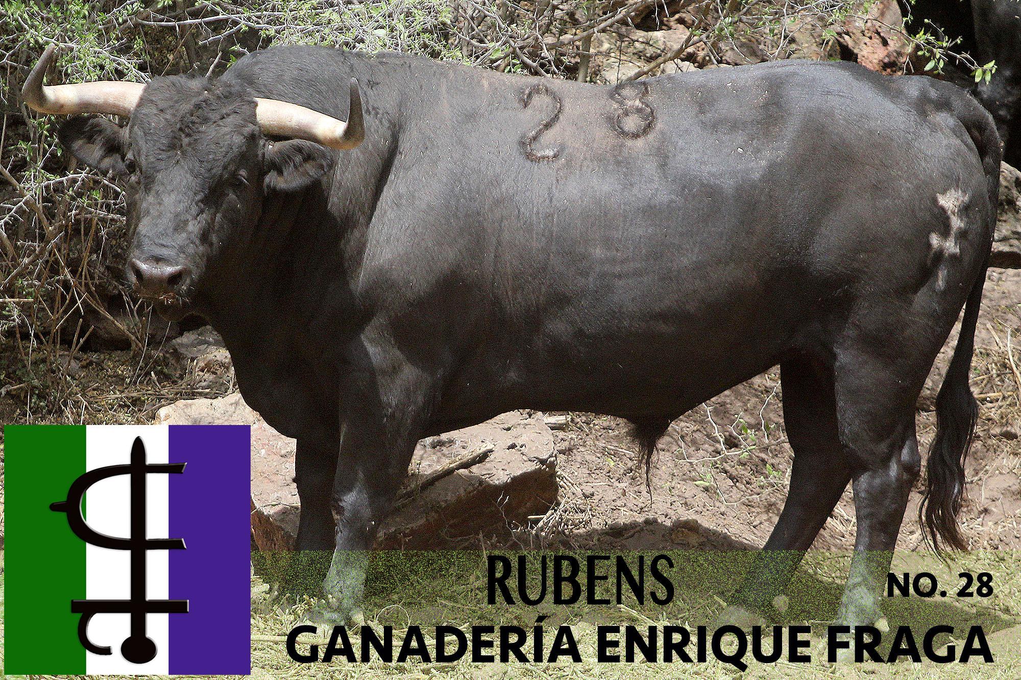 # 28 RUBENS.jpg