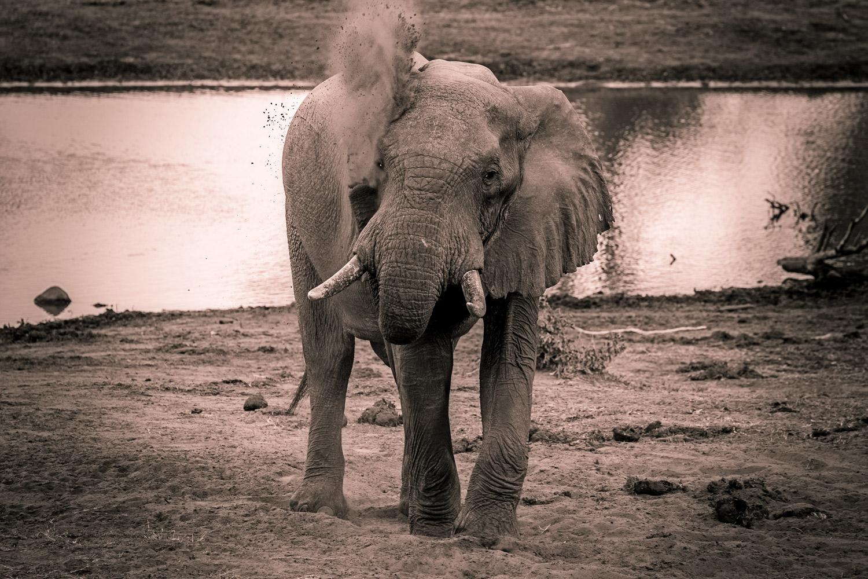 elephant-dust.jpg