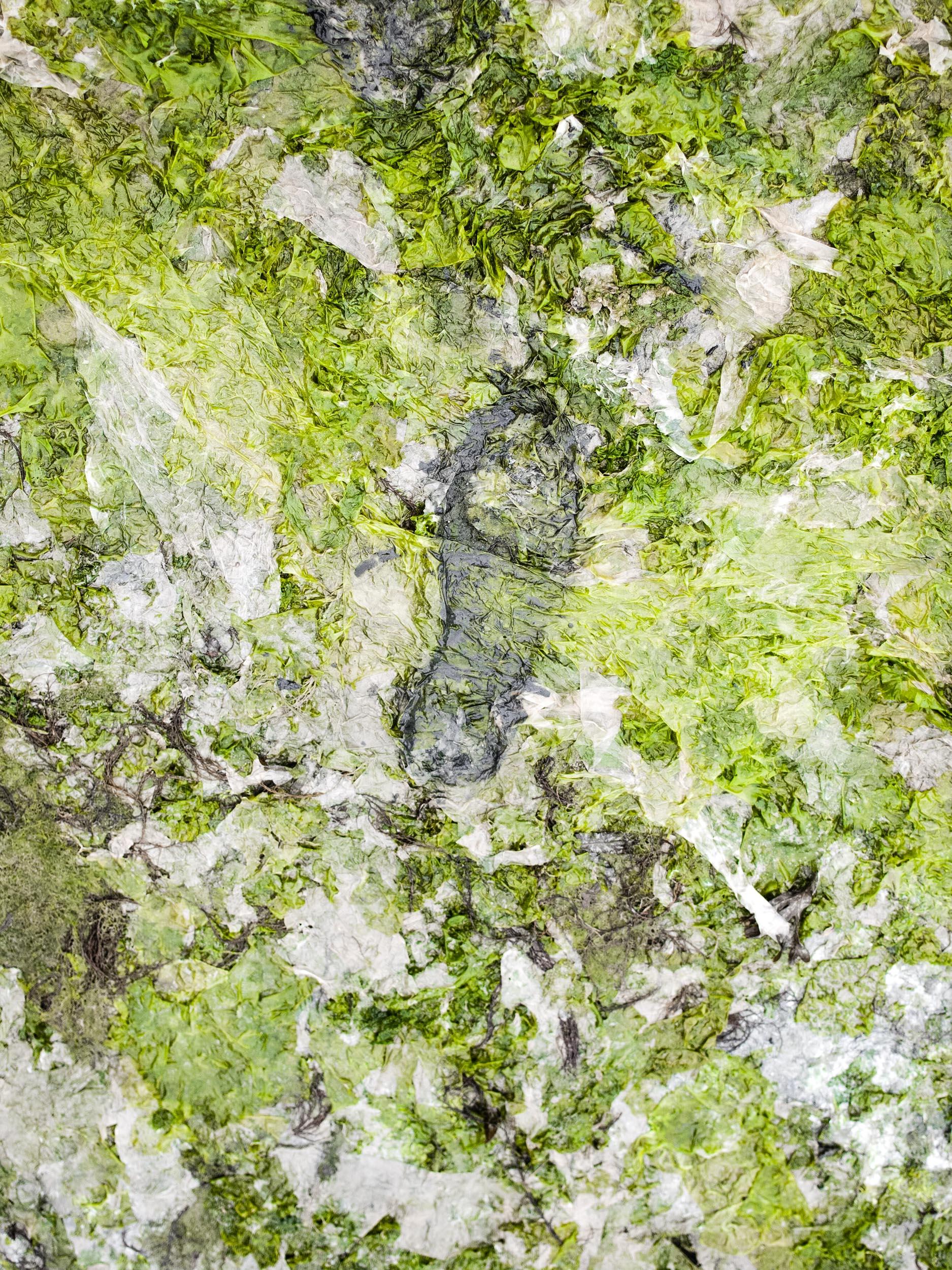 46-TERRES-BRULEES©AUGUSTIN-LE_GALL-15-2017-ALG-marees-vertes-bretagne©AUGUSTIN-LEGALL-IMG_2609.jpg