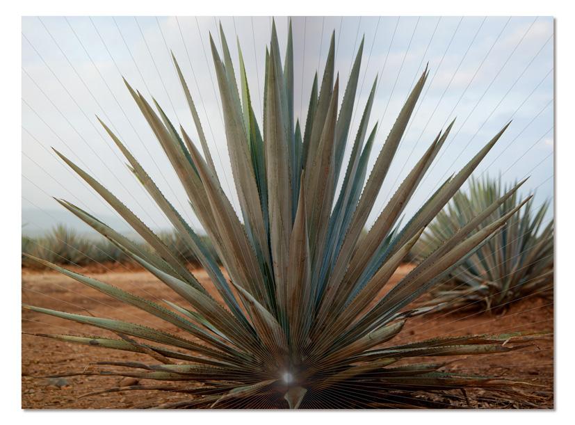 interiores_tequila1.jpg