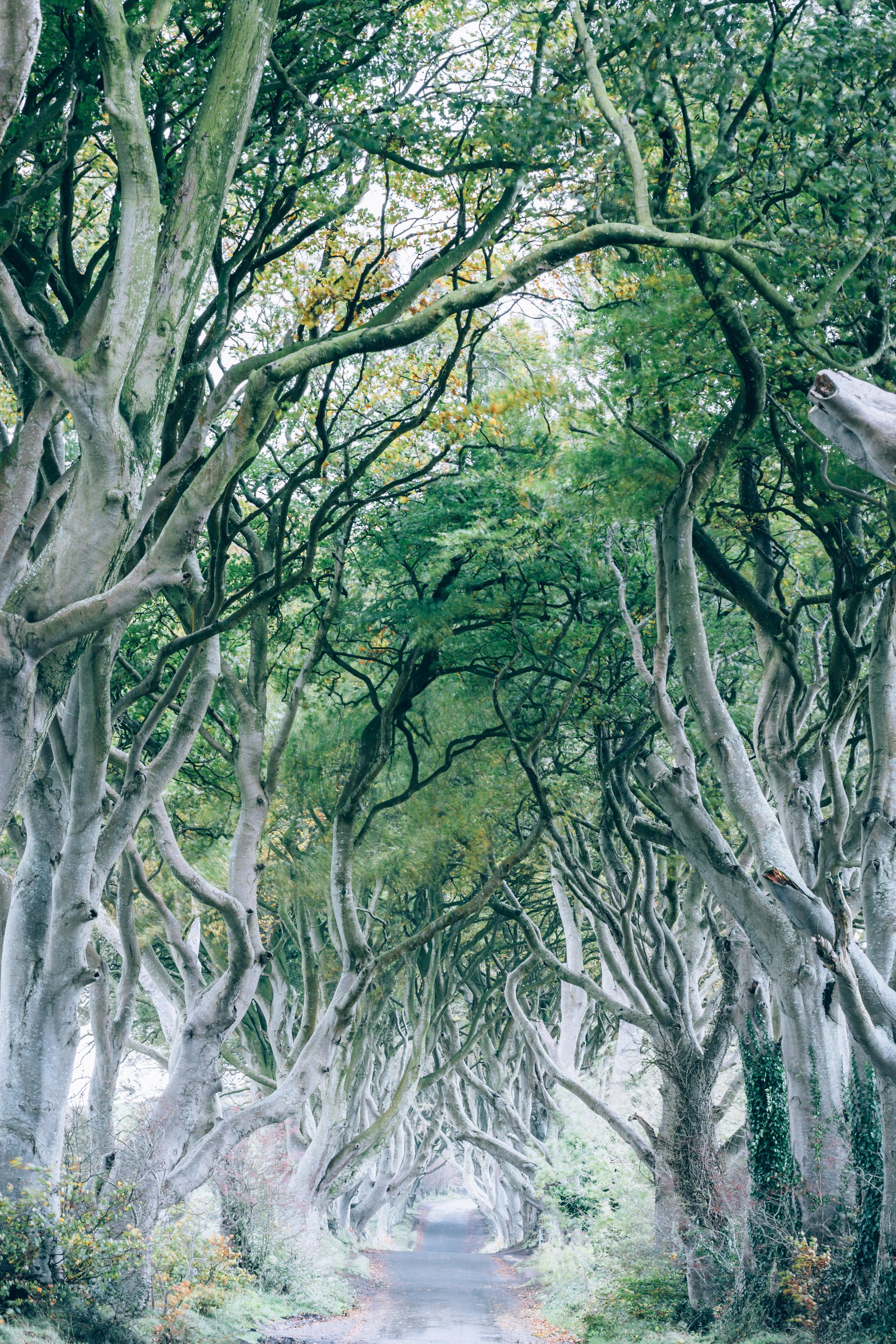 ireland-the-dark-hedges.jpg