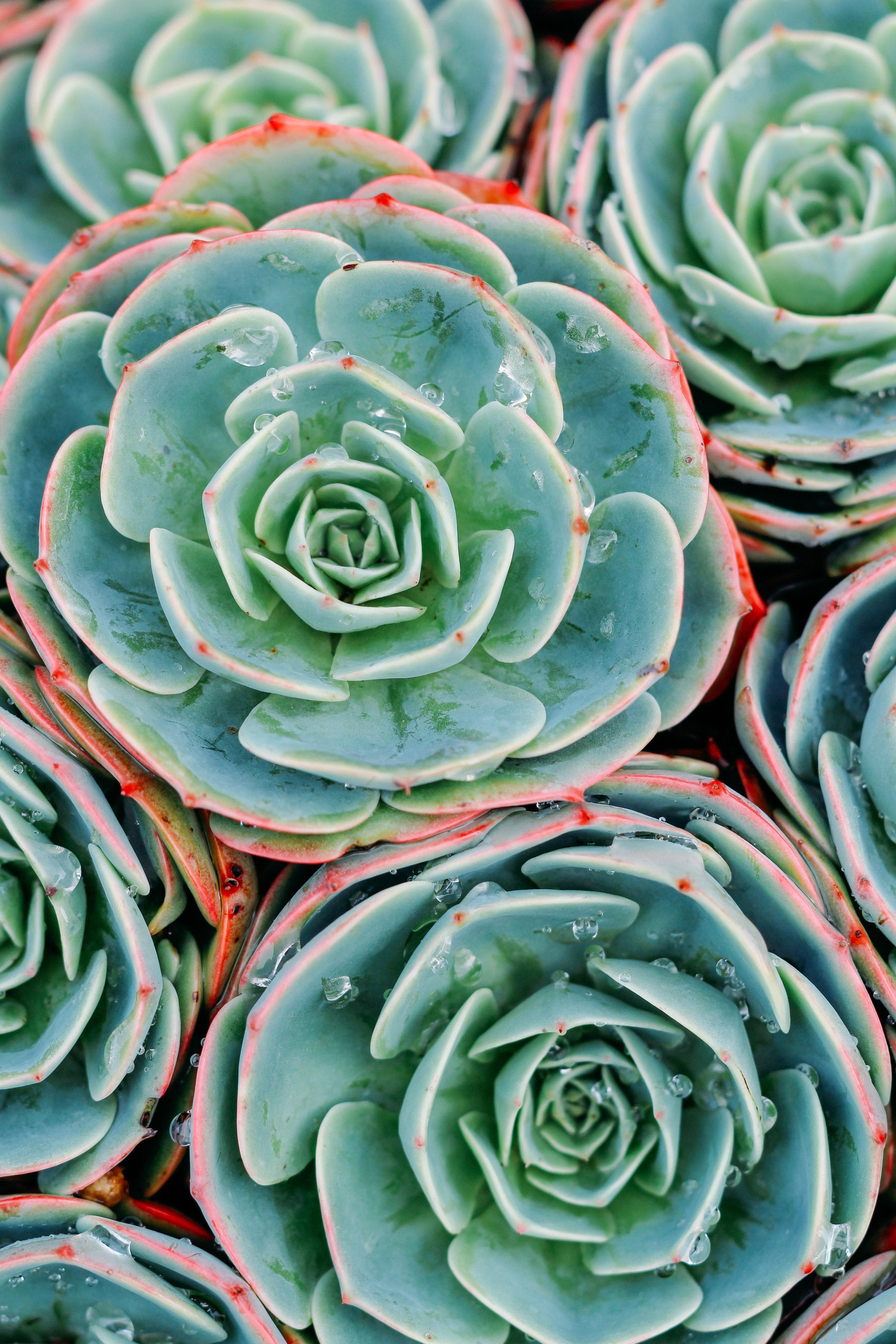 succulents-alcatraz-san-francisco.jpg