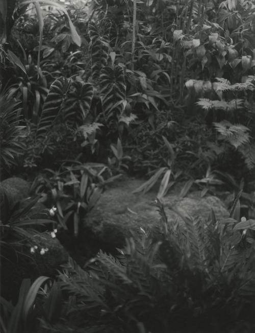 the garden   Spring 2013 Atlanta Botanical Garden  selenium toned silver gelatin print