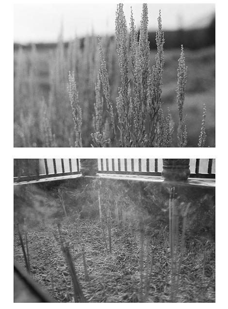 sagebrush and incense