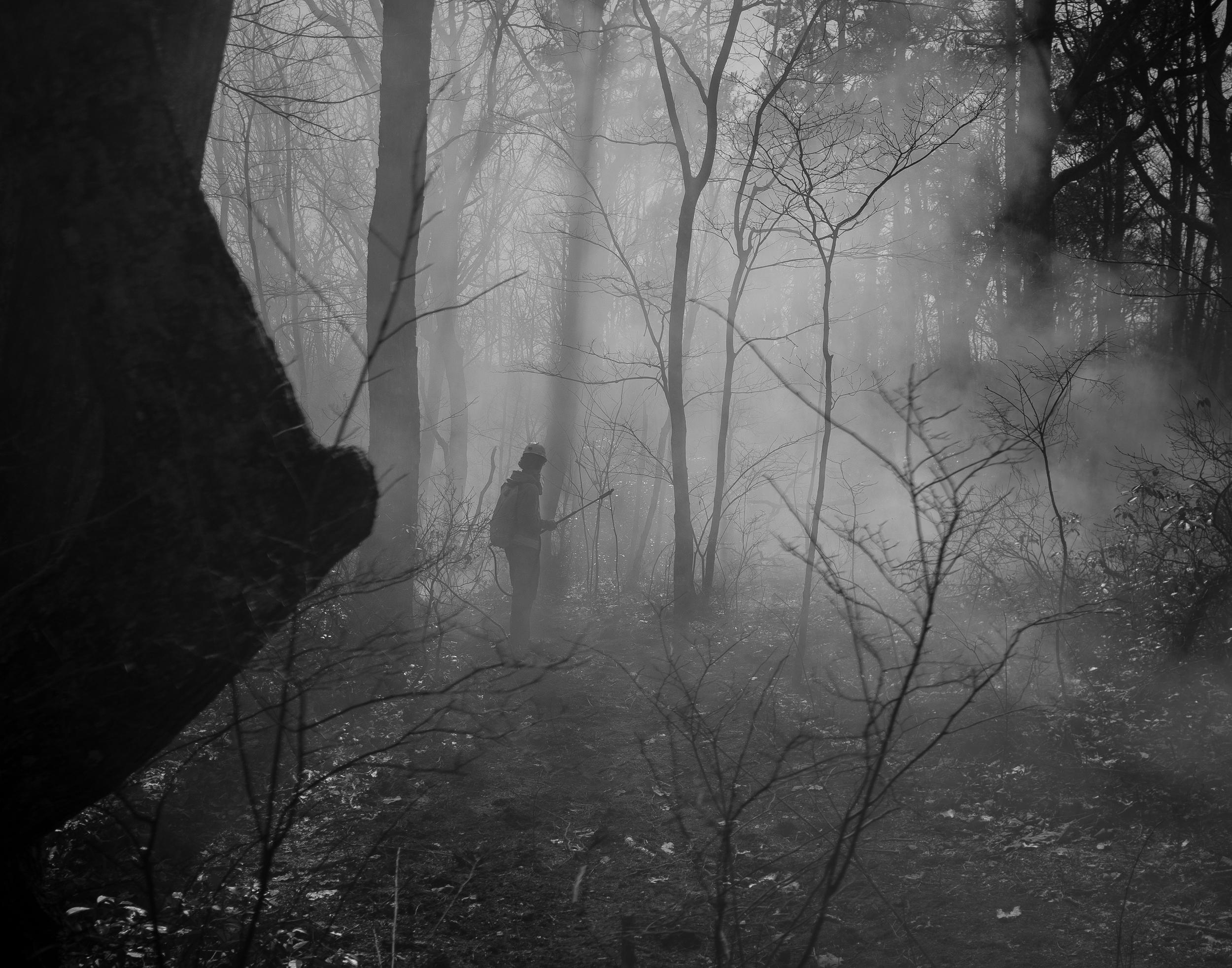 haze   2014 Sewanee, TN  digital capture