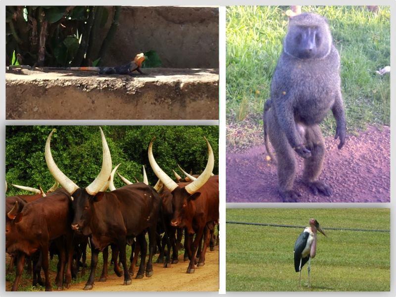 Wildlife sighted so far