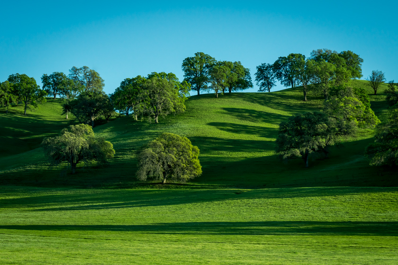 Early Spring shadows in Yolo County, California