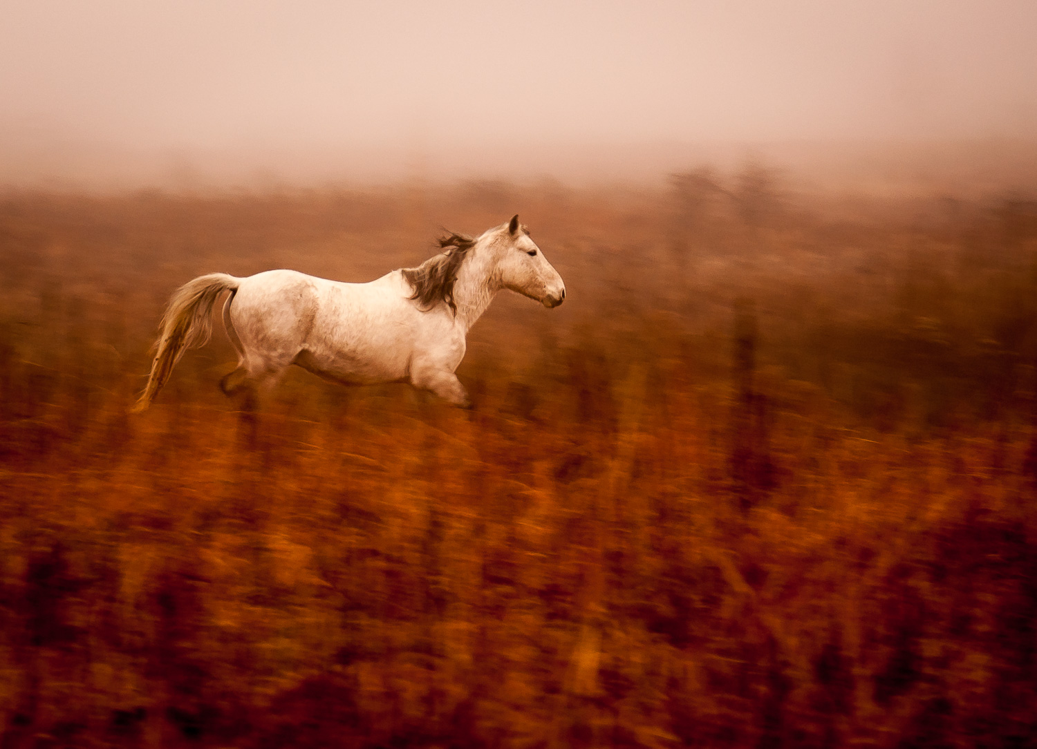Mustang in the mist in Greenwood County, Kansas