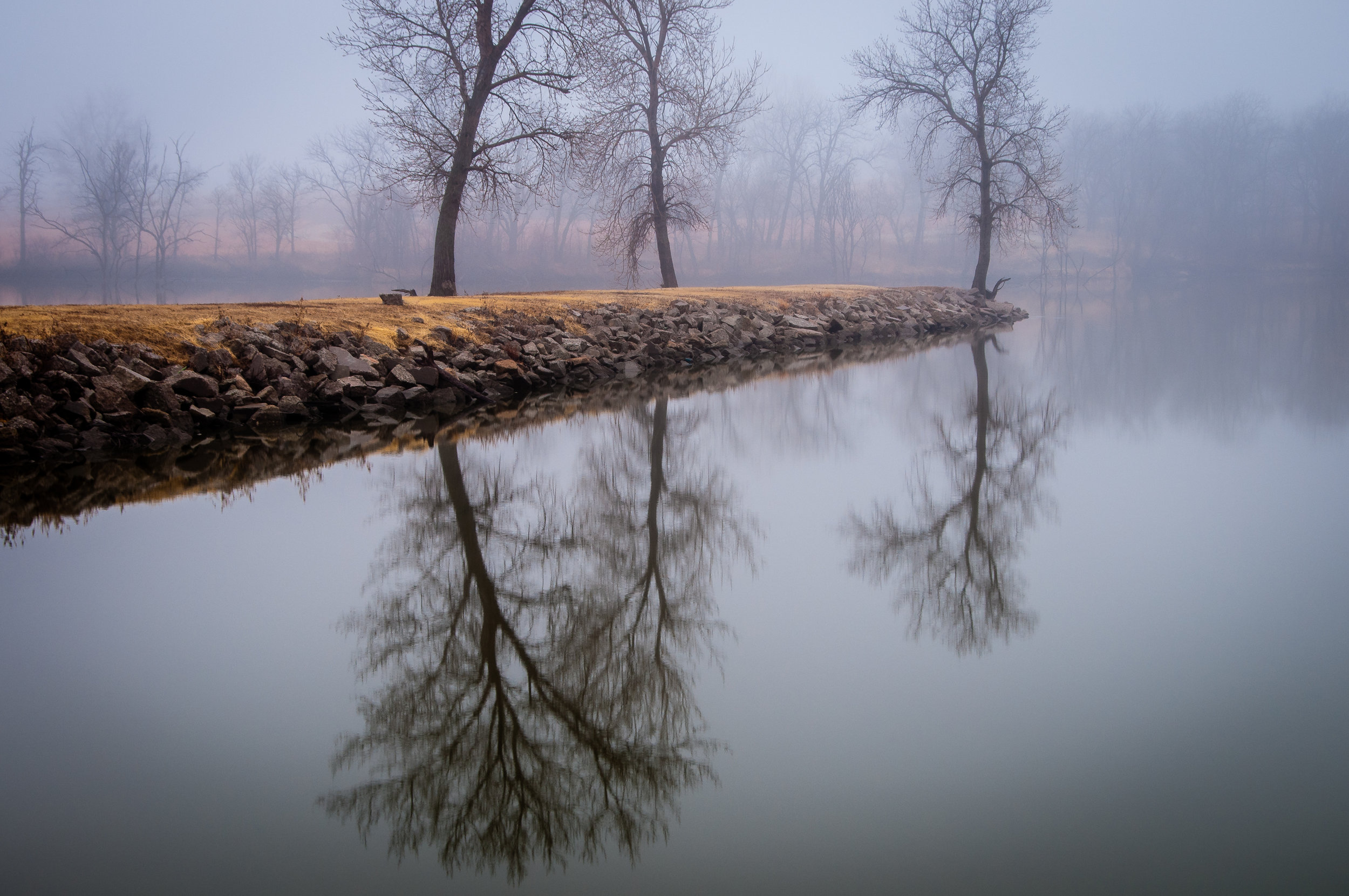 Three Trees Reflecting in the Fog at Harvey County East Lake