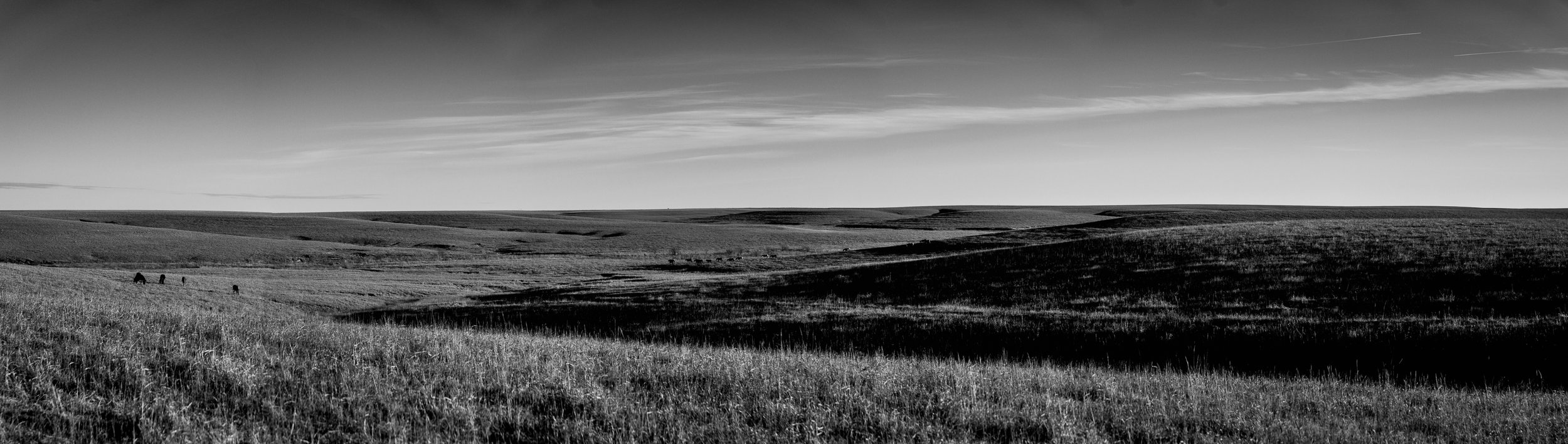Panorama Sunset & Shadows with Wild Mustangs