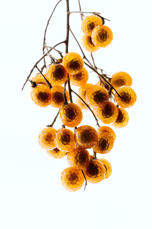 Western Soapberry Berries
