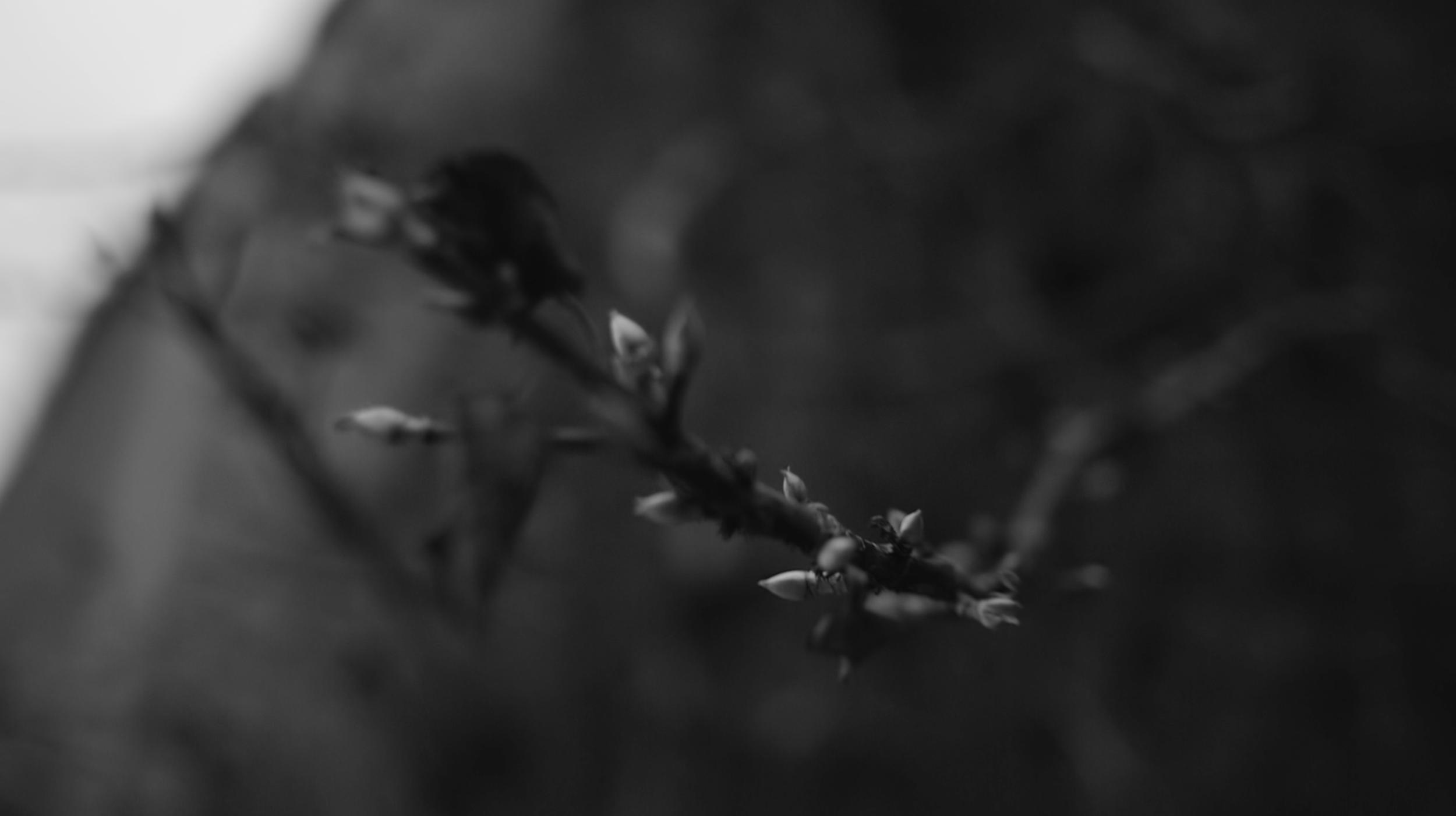 Screen Shot 2018-03-03 at 11.00.48 AM.png