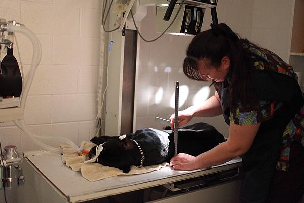 eEace Veterinary Clinic Imaging