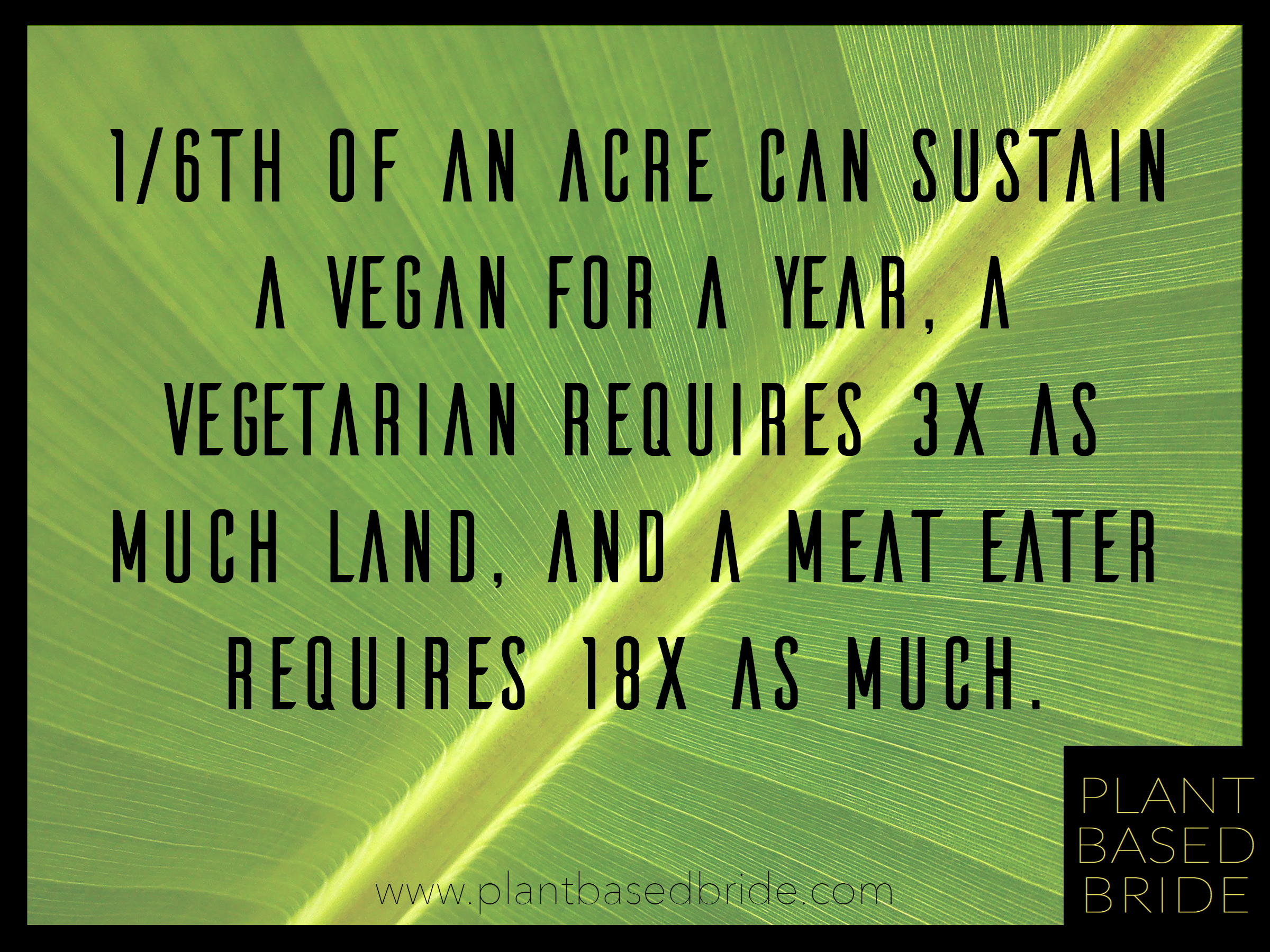Sustaining a vegan diet requires a tiny amount of resources in comparison with omnivorous diets.  Check out this comprehensive list of reasons to go vegan from plantbasedbride.com!