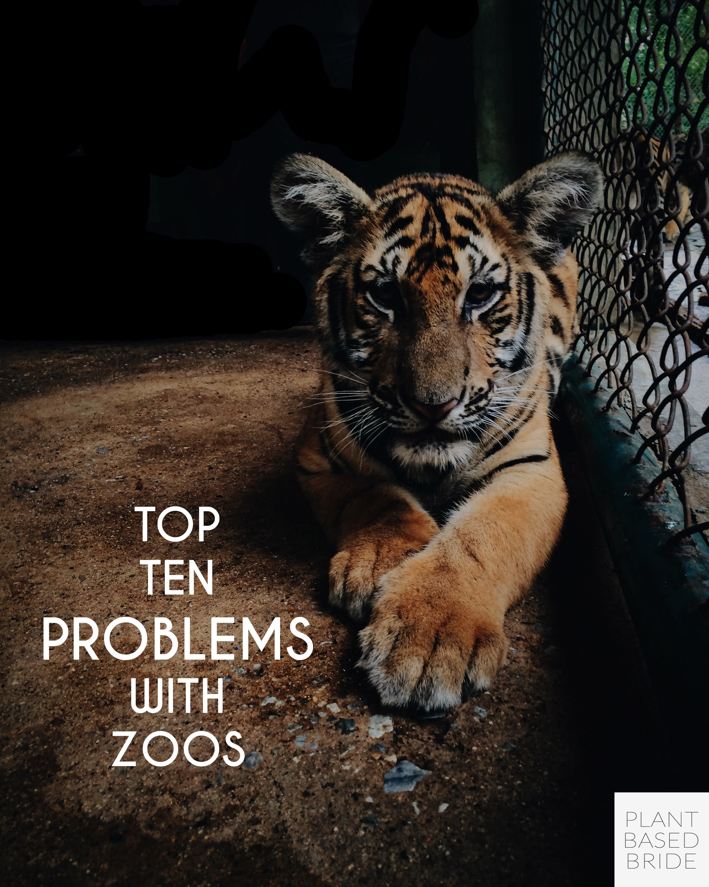 Zoos aren't all they're cracked up to be... learn the top ten problems with zoos and choose a more compassionate way to appreciate wild animals! // Plant Based Bride
