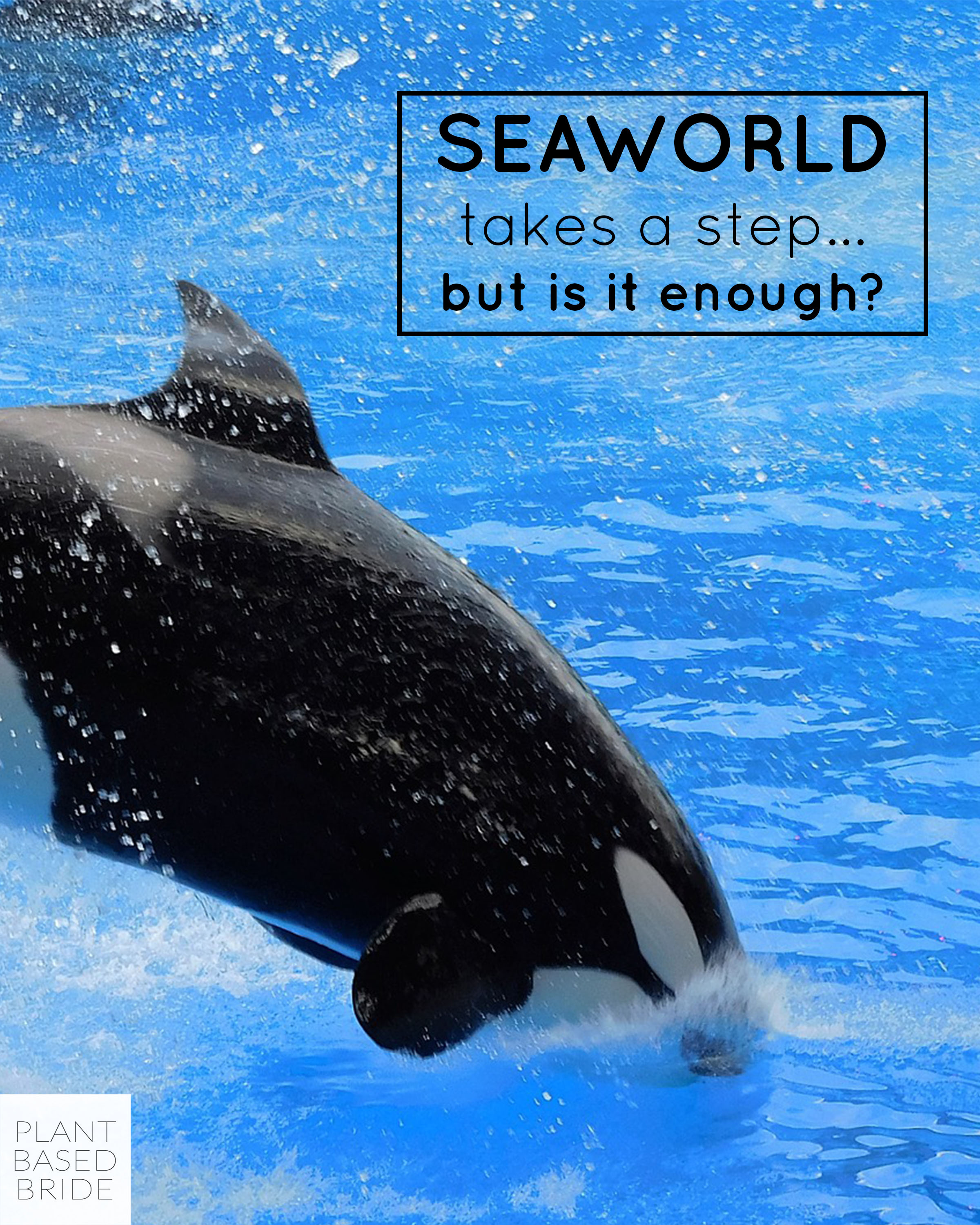 SeaWorld is ending its breeding program, but is it enough? // Plant Based Bride