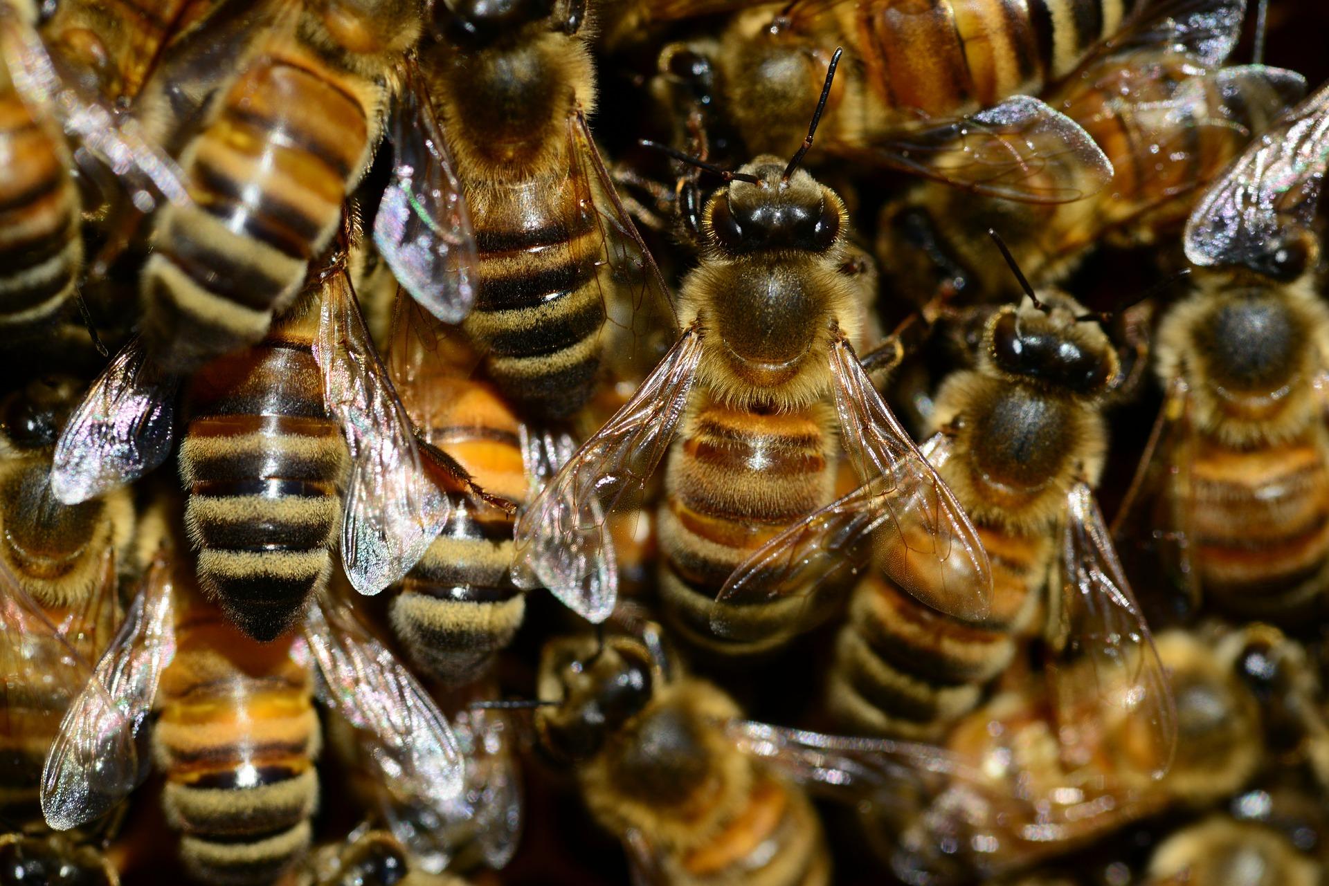 Is honey vegan? // Plant Based Bride
