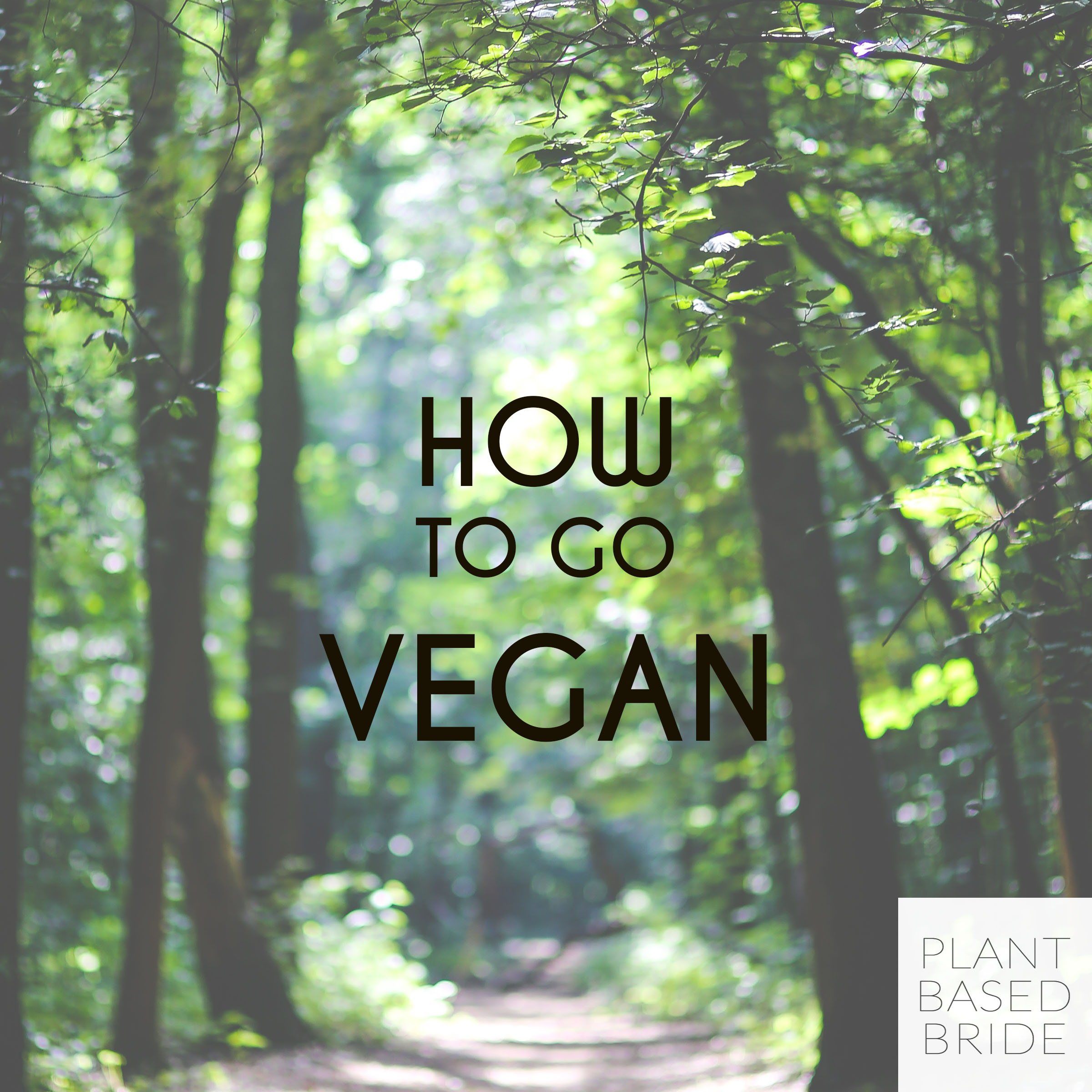 How To Go Vegan // Welcome to Plant Based Bride!