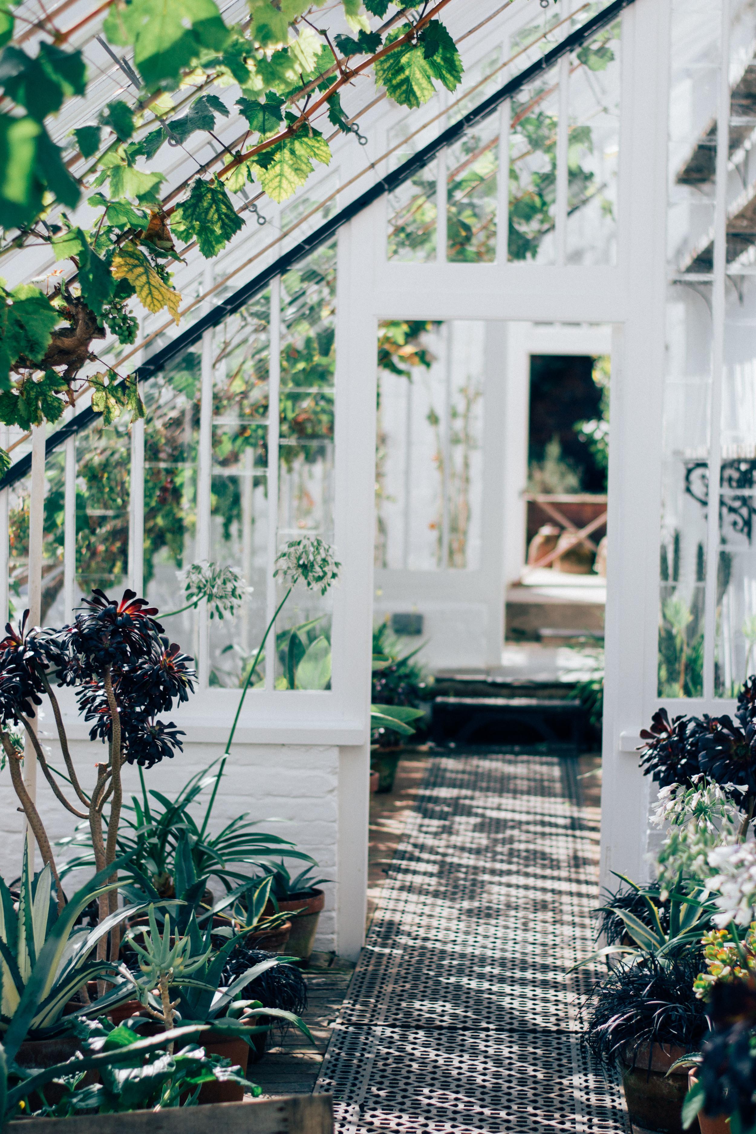 airy minimalism with loads of greenery