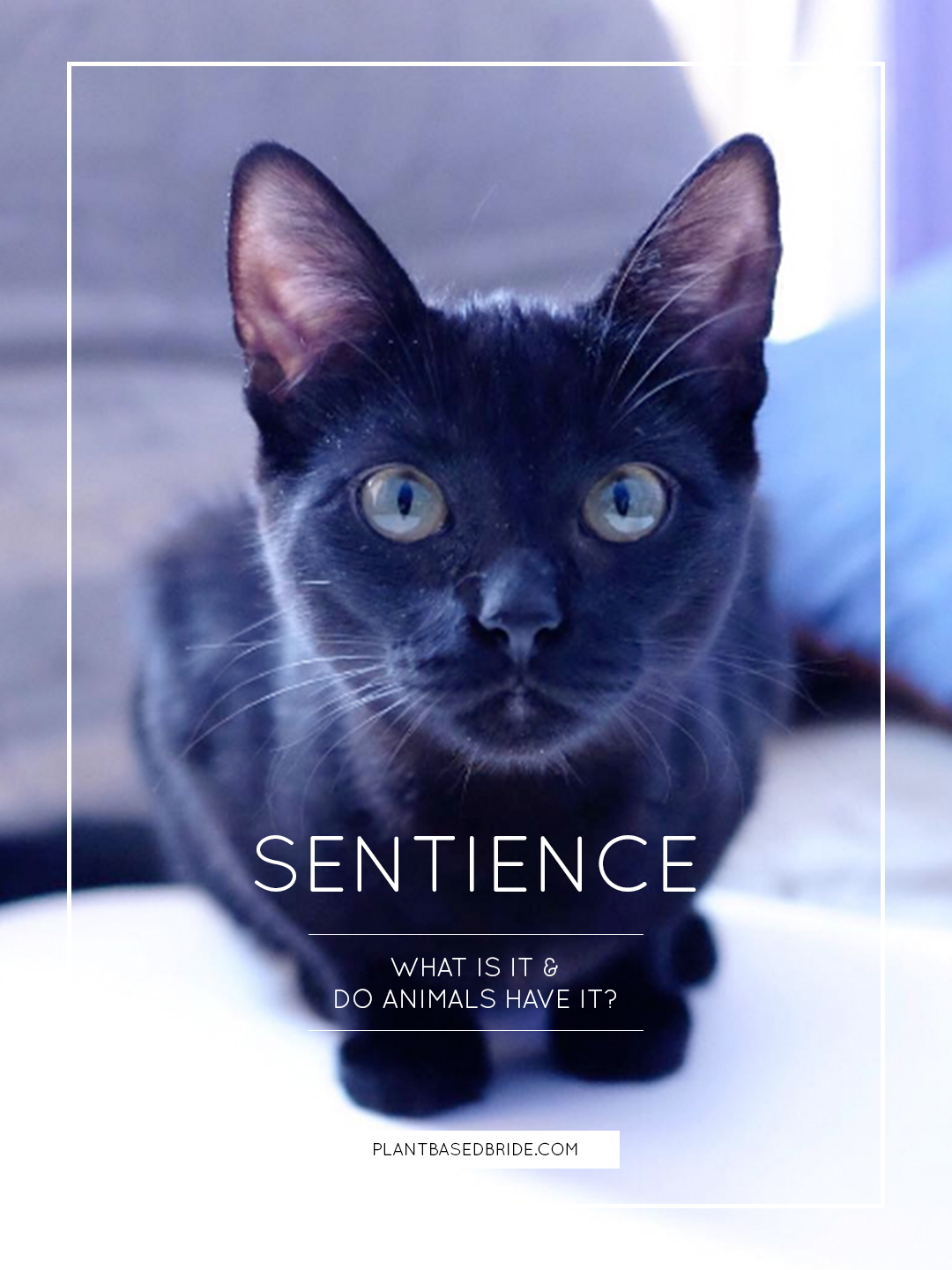 Sentience.  What is sentience?  Are animals sentient? // Plant Based Bride