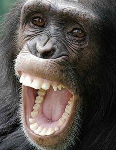 Chimpanzee Teeth // Plant Based Bride